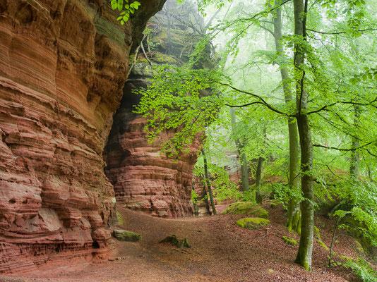 Altschloßfelsen I Pfälzer Wald