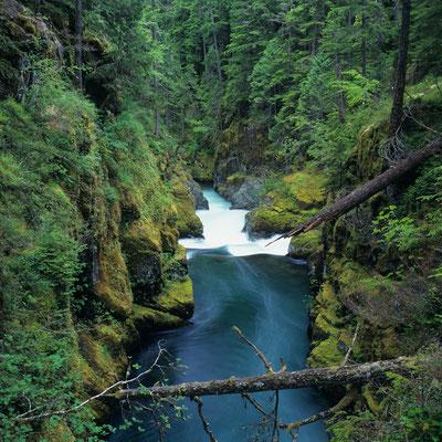 nahe Silver Falls I Mount Rainier Nationalpark I Washington