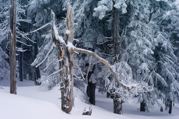 Brockenwinter I Nationalpark Harz