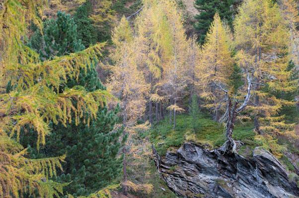 Herbst im Turtmanntal I Wallis