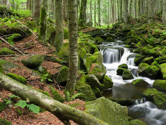 Kleine Ohe I Nationalpark Bayerischer Wald