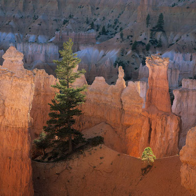 Am Queens Garden Trail I Bryce Canyon I Utah