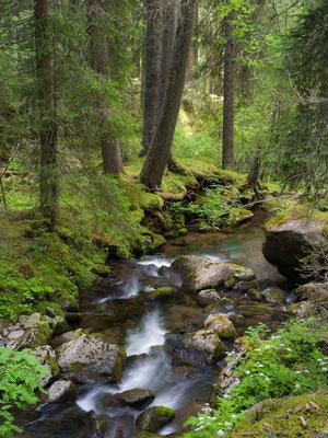 Val Travignolo I Naturpark Pale di San Martino I Italien