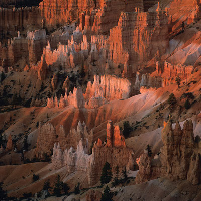 Felstürme im Morgenlicht I Sunrise Point I Bryce Canyon Nationalpark I Utah