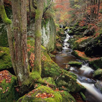 Steinklamm I Spiegelau I Bayerischer Wald