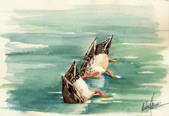 Plongeon à deux - 20x25cm - Aquarelle - Vendu