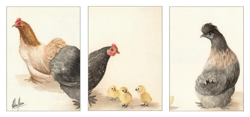 Trio poules & poussins - 50x23.5cm - Aquarelle - 90€