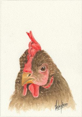 Tête de poule - 25X30cm -Aquarelle - Vendu