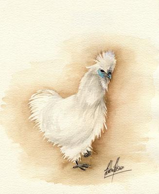 Nègre soie blanche barbue - 20x25cm - Aquarelle - Vendu