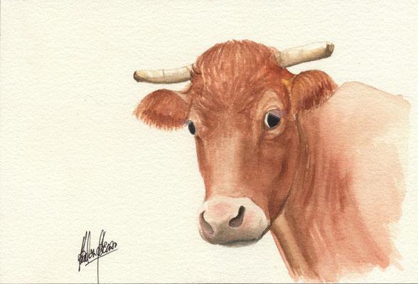 vache 2 - 13x18cm - Aquarelle - 10€