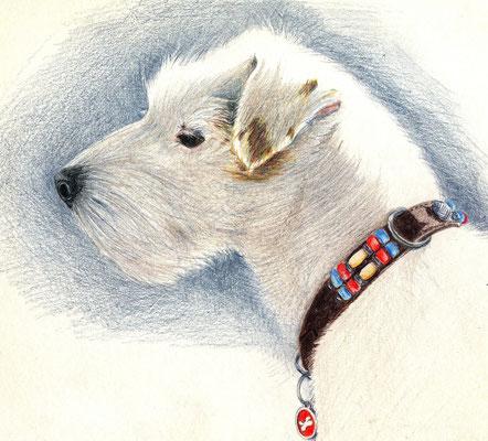 Chanunpa-21x29.7cm - Crayon de couleur - Collection privée