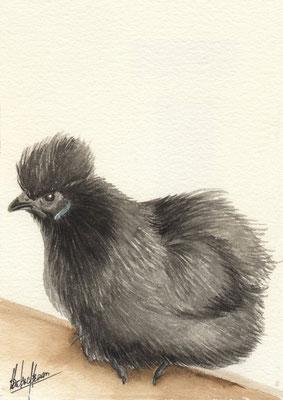 Nègre soie noire perchée - 20x25cm - Aquarelle - Vendu
