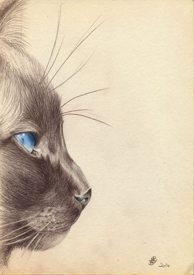 Chat Huchuq-21x29.7cm - Crayon de couleur - Collection privée