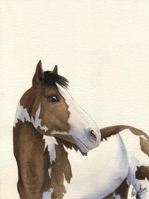 Paint horse - 30x40cm - Aquarelle - Vendu