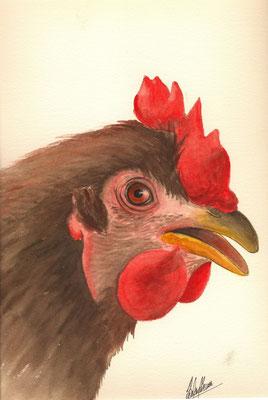 Portrait poule - 30x40cm - Aquarelle - 50€
