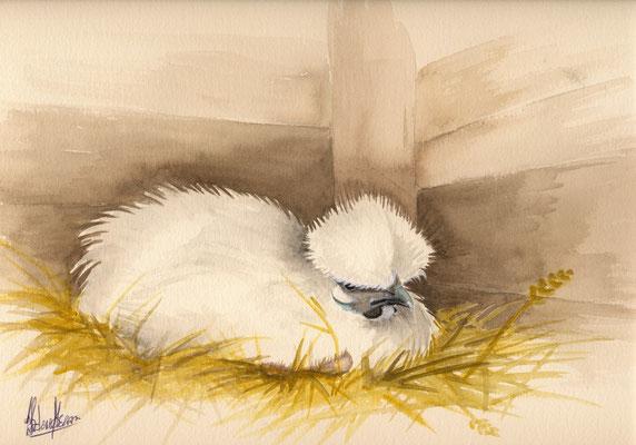 Nègre soie blanche couvant - 30x40cm -Aquarelle - 75€
