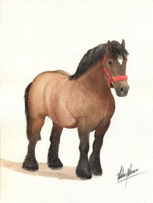Cheval de trait - 18x24cm - Aquarelle - Vendu