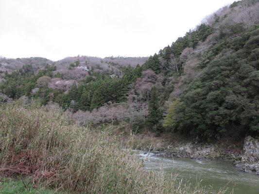 4月12日 八重桜がまだ咲いていません