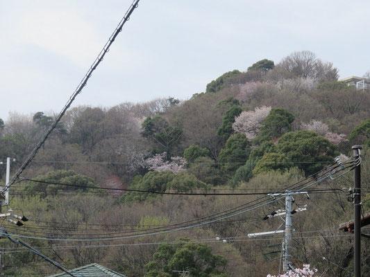 武庫山のお山は花盛り