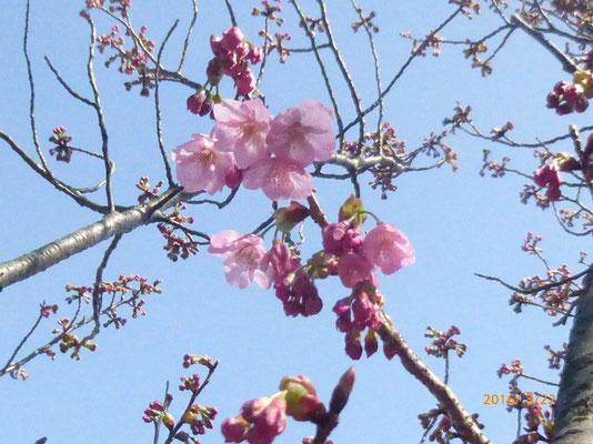 咲き始めました