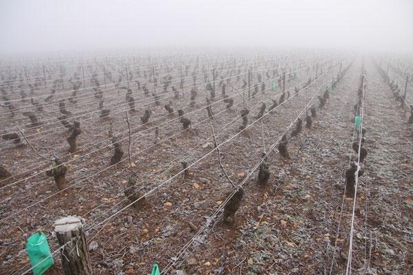 Domaine de la Folie - Le Clos Marey en hiver