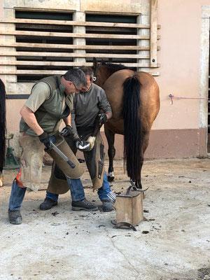 Hufschmid beim Beschlagen eines Pferdes