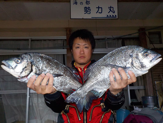 4月5日 磯釣りで山田さん 良型チヌ45.5㎝・45㎝