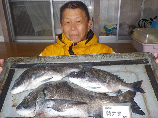 4月7日 磯釣りで山本さん チヌ44.2㎝を頭に3匹