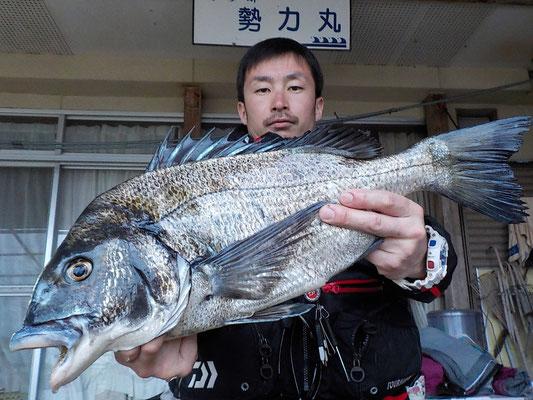 4月5日 初めての松島の磯釣りで川口さん ガバチヌ53.5㎝を頭に3匹