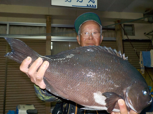 4月15日 磯釣りで塚本さん 良型クロ49cm 2.166g
