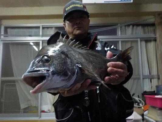 4月1日 磯釣りで宮﨑さん 良がチヌ46.5㎝を頭に2匹