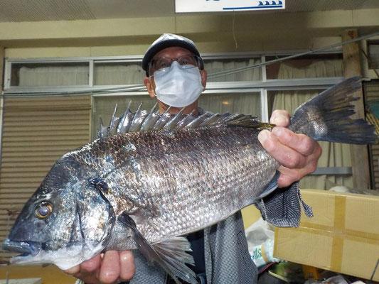 3月27日 磯釣りで前田さん 今季4枚目の50cmオーバー