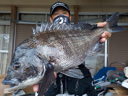 4月19日 磯釣りで辻さん 今季最大52.3cm