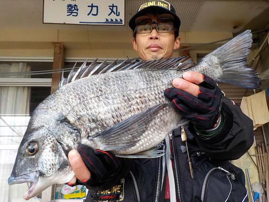 4月2日 磯釣りで中川さん ガバチヌ50㎝を頭に3匹