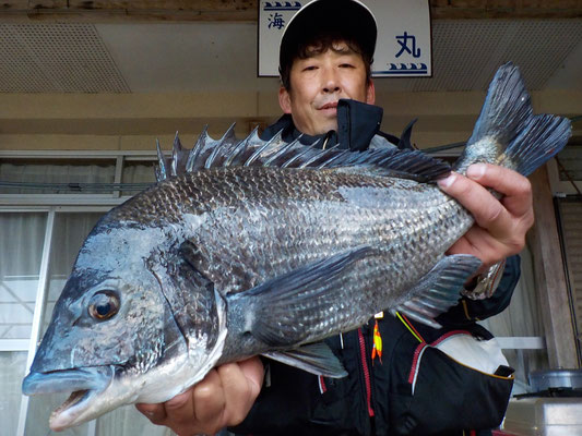 3月5日 磯釣りで野口さん ガバチヌ51.4㎝
