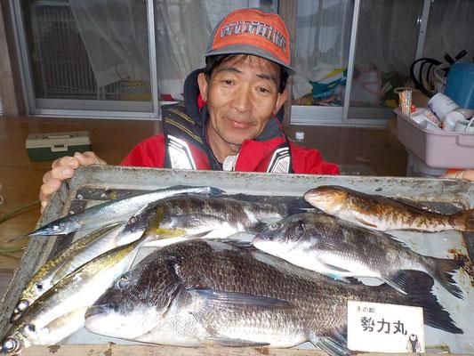 4月5日 磯釣りで小林さん 良型チヌ45㎝を頭に3匹 アジ、アイナメ、サヨリ