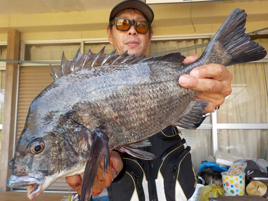 5月17日 磯釣りで花岡さん 今季2枚目ガバチン52.2cm