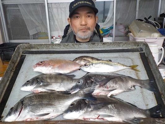 4月8日 磯釣りで竹口さん チヌ、メイタ4匹 タイ、アジ、メバル