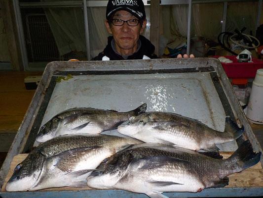 4月3日 磯釣りで飯塚さん チヌ43.5㎝を頭に4匹