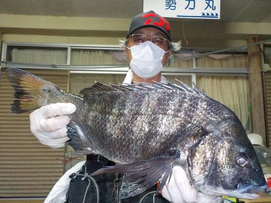 5月8日 磯釣りで松村さん ガバチン50.6cm