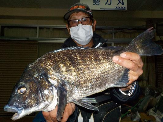 4月25日 磯釣りで花岡さん ガバチヌ50.5cm.