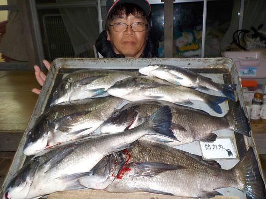 4月1日 磯釣りで瀬口さん 良型チヌ49㎝・48㎝・45㎝43㎝・42㎝メイタ2匹