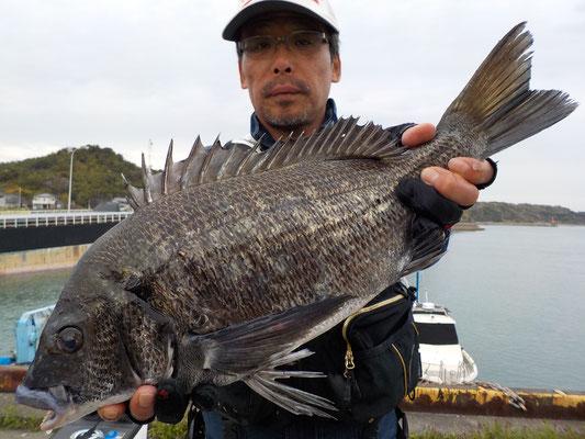 3月29日 磯釣りで宮本信也さん がバチン50cm