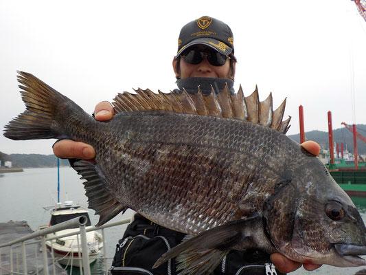 3月5日 磯釣りで東さん 良型チヌ45.2㎝を頭に2匹