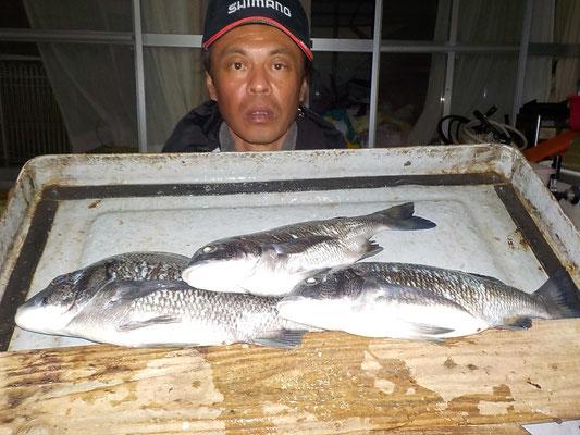4月1日 磯釣りで深浦さん チヌ40㎝弱を頭に3匹
