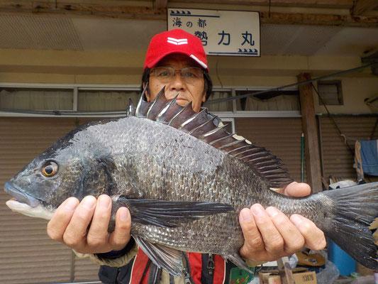 3月9日 磯釣りで川端さん ガバチヌ50.5cm