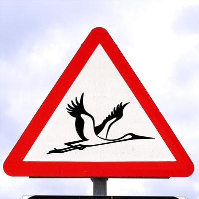"""Schild an der Straße """"zum Flugplatz, dass vor tieffliegenden und die Straße querenden Störchen warnt"""