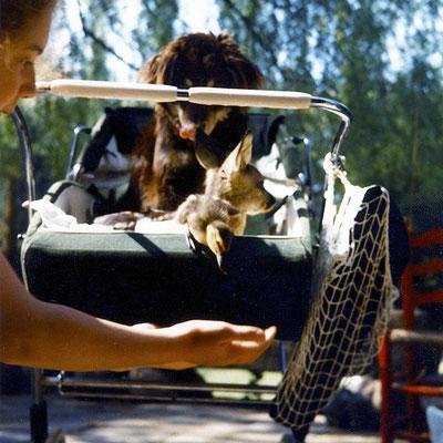 """vor 20 Jahren musste auch schon einmal der Mischlingshund """"Elat"""" auf Entenküken und Kitz aufpassen, was er mit Bravour tat"""