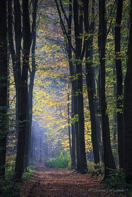 Tagesanbruch im Wald