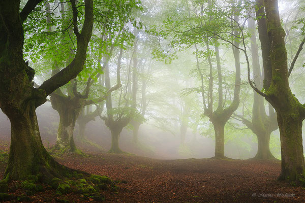 Nebelwald Spanien